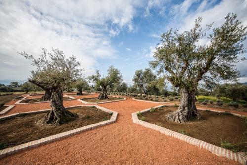 Centennial olive trees, carlota square