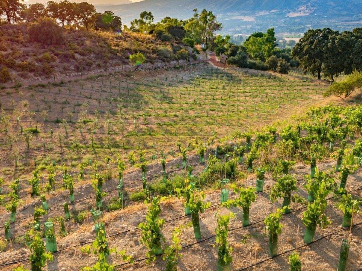 Ecological vineyard