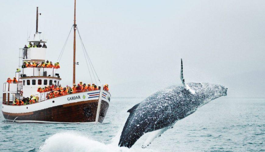 Mirissa whale watching