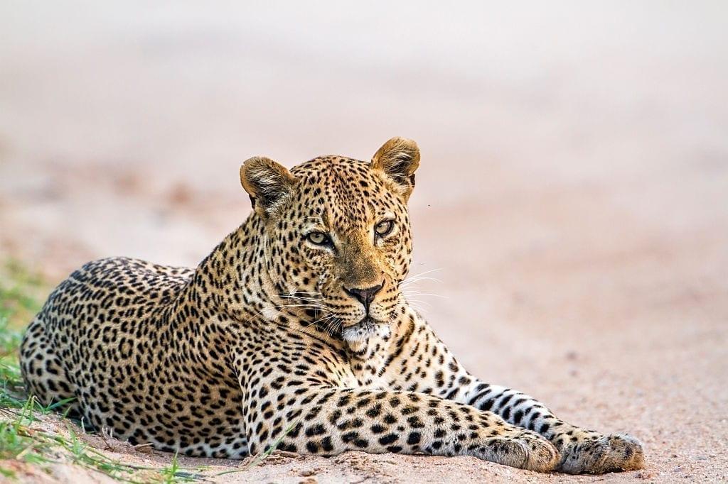 Day 03 Yala National Park - Kumana National Park - Full Day Leopard Safari