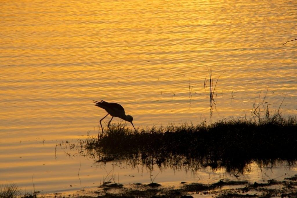 Day 03 Mirissa - Yala National Park