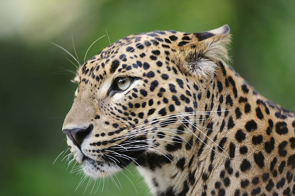 Day 07 Wilpattu National Park - Full Day Leopard Safari