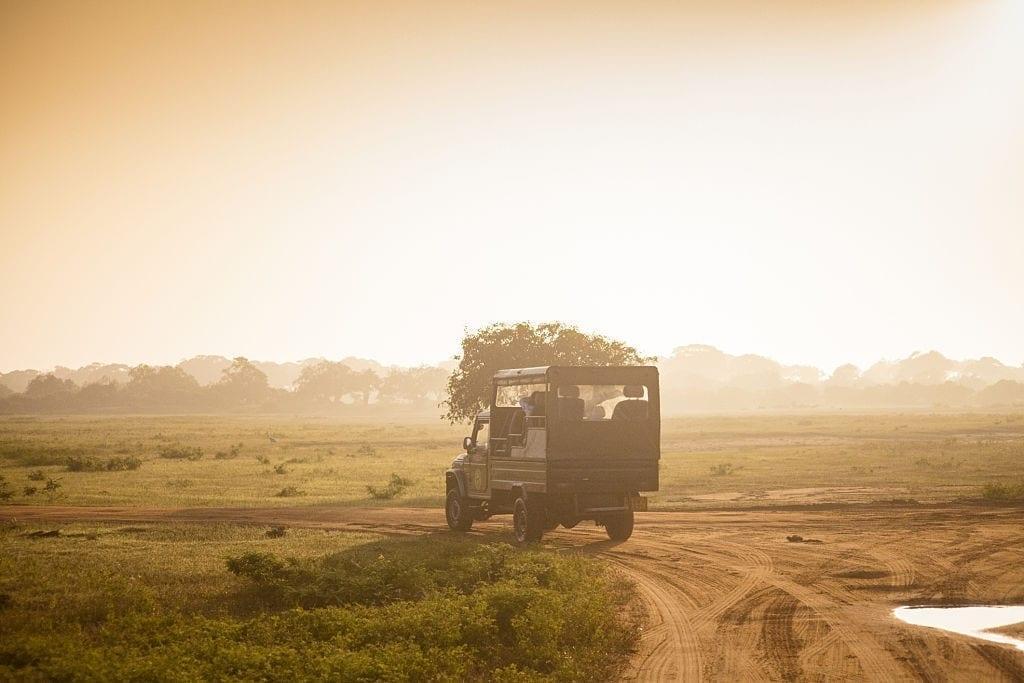 Day 02 Yala National Park - Full Day Leopard Safari