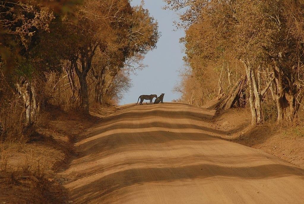 Day 08 Wilpattu National Park - Full Day Leopard Safari
